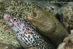 Oscar & Felix