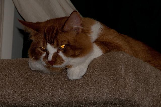 Evil Eyes Hippie Kitty