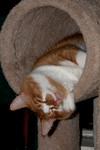 Hippie Kitty sleeps in the tube