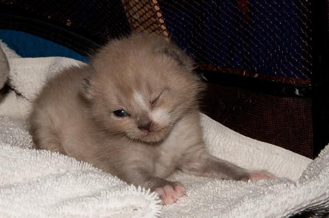 Kitten found on my carport 06/16/11
