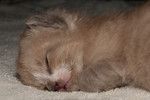 Sleepy kitty week two