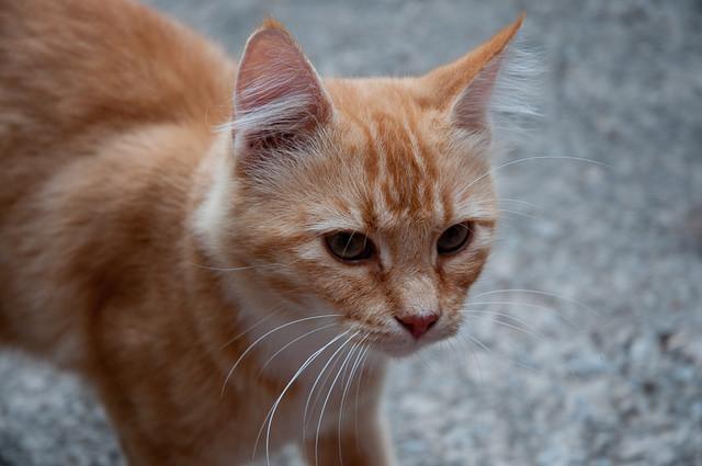 Mama Kitty, summer 2010