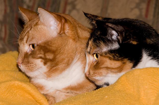 RJ and Sissy
