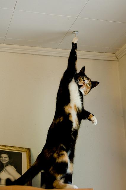 Sissy acrobatics