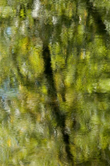 Reflection Amicalola