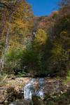 Highlight for Album: Amicalola Falls State Park
