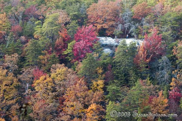 Cloudland Canyon Georgia