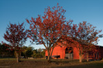 Sunrise Farms B&B, Barn and potbellied pig 10/22/10 - 10/24/10