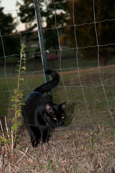 Halloween Kitty Sunrise Farms B&B 10/22/10 - 10/24/10