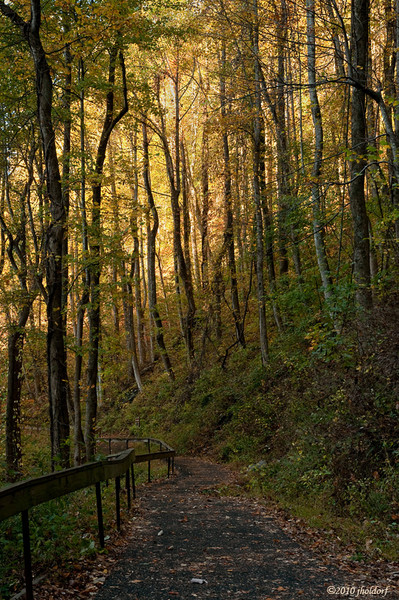 Amicalola Falls State Park trail Dawsonville, Ga.  10/31/10