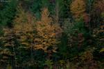 Vogel State Park before sunrise 10/17/10