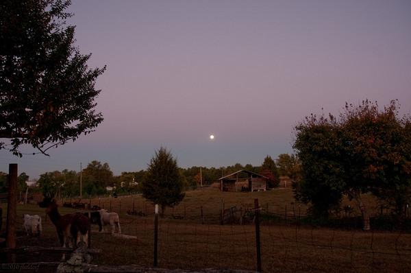 Dawn at Sunrise Farms B&B 10/24/10