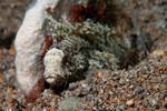 Longspine Washfish